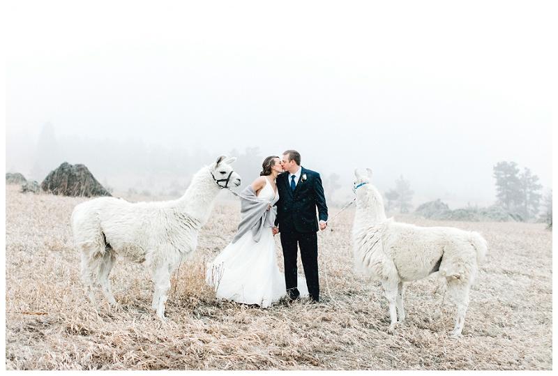 llamas bride and groom snowy mountains kissing